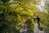 Cycling in the english countryside Tring, Borough of Dacorum, Hertfordshire, England