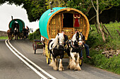 Traditional gypsy horse drawn caravan on road heading towards Appleby Horse Fair Cumbria, England