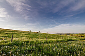Frühlingswiese bei Rainau, bei Aalen, Ostalbkreis, Baden-Württemberg, Deutschland