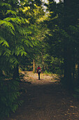Rear view of person walking on footpath in forest