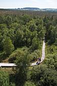 Hikers on boardwalk through Black Moor (Schwarzes Moor) wetland