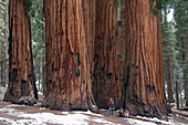 Family standing in front of giant sequoias, Sequoia and Kings Canyon National Parks, California, USA