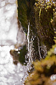 Close-up of water flowing over mossy rock