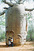 Children looking up at baobab tree