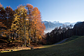 A forest in autumn colours near Luchsingen, Glarus Alps, canton of Glarus, Switzerland