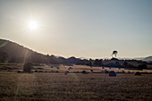 Hey bales on a field in evening light near Canyamel, northeastern coast of Mallorca, Balearic Islands, Spain