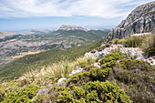 View of the forests and summits near Lluc during the ascent of the Puig de Massanella, Serra de Tramuntana, north of Mallorca, Balearic Islands, Spain