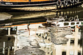 A small cargo vessel with Hamburg sign which is reflected in the water in the almost dry-fallen canal, Hamburg, Germany