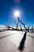 Reste eines Baumes und Strauches im Golf von Mexiko  bei Sonnenschein und blauem Himmel, Ft.Myers Beach, Florida, USA