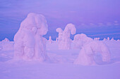 Snowy forest and strong frozen trees in pink dusk in winter, Riisitunturi National Park, Kuusamo, Lapland, Finland, Scandinavia