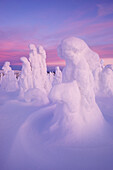 Panoramic view with snowy forest and strong frozen trees in pink dawn in winter, Riisitunturi National Park, Kuusamo, Lapland, Finland, Scandinavia