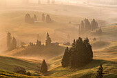 Alpe di SiusiSeiser Alm, Dolomites, South Tyrol, Italy. Autumnal morning light on the Alpe di SiusiSeiser Alm