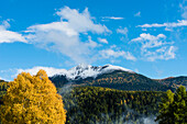 An autumn scenery with yellow coloured trees in the contrast to the blue sky and the Scharzhorn, black horn with fresh snow, Radein, South Tirol, Alto Adige, Italy