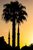 Silhouette of the minarets of the Hagia Sophia and a palm tree during sunrise, Istanbul, Turkey