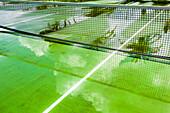 Grün farbiger Tennishartplatz nach einem Regen mit Spiegelungen, Hamilton, Insel Bermuda, Großbritannien