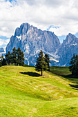 Die Bergkulisse auf der größten Hochalm Europas, Seiser Alm, Compatsch, Südtirol, Italien