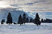 Haystack at the Buckelwiesen, near Kruen, view to Karwendel range, Bavaria, Germany