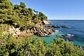 Costa Brava. Coastal región that stretches from Blanes, 60 km northeast of Barcelona, to the French border. Cap Roig coast. Girona. Catalonia. Spain.