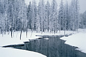 Nez Perce Creek with morning frost in winter, Yellowstone National Park, Wyoming, USA.