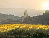 Navarrete, Camino de Santiago, Santiago way. Navarrete village in autumn, La Rioja, Rioja wine region, Spain, Europe.