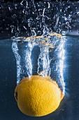 Studio photography, lemon dipping, SPAIN
