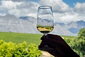 SOUTH AFRICA- Wine tasting with vineyard in background.