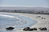 beach of Paternoster  at West Coast National Park, Western Cape, South Africa