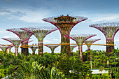 The Supertree Grove. Gardens by the Bay. Singapore, Asia.