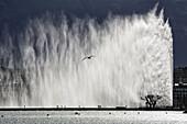 200 meters high famous fountain on Geneva Lake - Jet d´Eau, Geneva, Switzerland