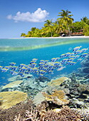 Half underwater view with reef and fishes, Maldives, Indian Ocean.