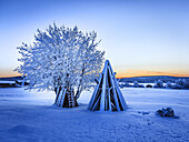 Wood stacked and a snow covered tree in extreme cold temperatures, Lapland, Sweden.