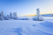 Snow covered trees in extreme cold temperatures, Lapland, Sweden.