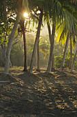 Sunrise on a black sand beach at Papagayo Bay.
