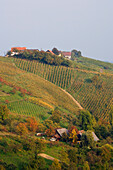 Vine yards and farms, Poessnitz near Leutschach, Southern vine route