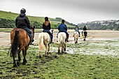Horses being ridden along the Gannel at low tide in Newquay, Cornwall.