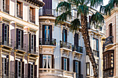 Front of old buildings at the Plaza de la Constitution with a palm tree, Malaga, Andalusia, Spain