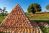 Pipka farms, growing in the Vysocina Region different kinds of pumpkins. Czech Republic.