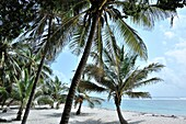 Wonderful places at the Indian Ocean with sandy beach and palms, Mombasa, Kenya.