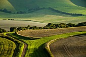 Late summer afternoon in South Downs National Park, East Sussex, England.