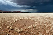 Landscape photo of a fairy circle in ivory grass below a dark rain cloud. Sossusvlei, Namib Naukluft National Park, Namibia.