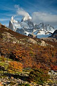 Landscape photo of autumn foliage below Mount Fitz Roy in soft morning light. El Chalten, Patagonia, Argentina.