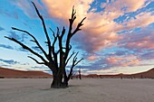 Landscape photo of a dead tree under a colourful sunrise sky. deadvlei, Namib Naukluft National Park, Namibia.