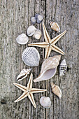 Sea shells and Starfish on weathered timber decking.