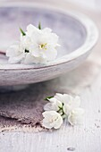 Philadelphus flowers with wooden bowl