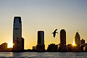 Sunset views of the Hudson River from Battery Park. A seagull just fish and the sun shines while hiding in one of the skyscrapers of Jersey.