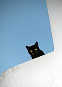 Black cat with green eyes shares down from the top of a whitewashed wall in the picturesque village of Vejer de la Frontera, voted by the Spanish as one of the most beautiful in Spain.