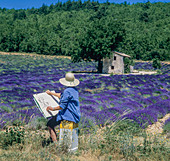 Middle aged woman drawing stone house in blooming lavender field, Vaucluse, Provence, France.