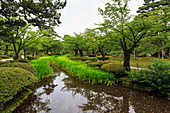 Stream with lush greenery and reflections, Kenrokuen, one of Japan's most beautiful landscape gardens in summer, Kanazawa, Japan, Asia