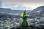 Offering to Pele left in Kilaeau Iki Crater, Volcanoes National Park, Hawaii