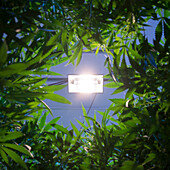 Denver, Colorado- Looking up through the canopy of a Rx Green Solutions medical marijuana grow room using high-powered lighting